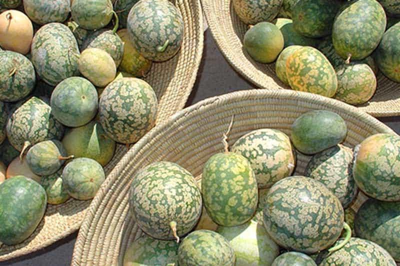 Kalahari Wild Melons